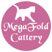 MegaFoldCattery - Scottish Fold Breeders