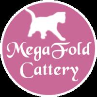 MegaFoldCattery - Scottish Fold Breeders